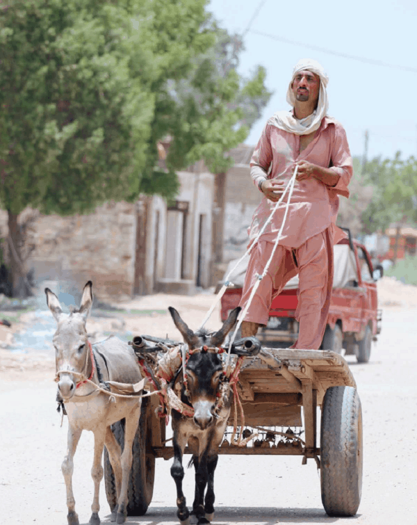 Photo of a man in Nowshera, Pakistan is going about his daily errands in a donkey cart  featured in Roche Diagram healthcare magazine publications